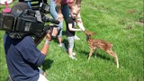 Family caring for tiny fawn after backyard discovery - (3/10)
