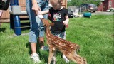 Family caring for tiny fawn after backyard discovery - (7/10)