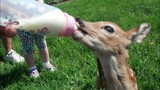 Family caring for tiny fawn after backyard discovery - (4/10)