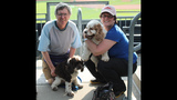 Pups pack PNC Park - (24/25)