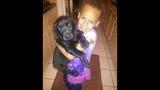 Photos: 1-year-old black lab Tyson - (11/13)