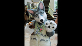 'Furries' return to Pittsburgh for 2013… - (9/25)
