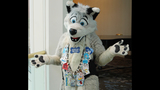 'Furries' return to Pittsburgh for 2013… - (25/25)