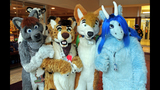 'Furries' return to Pittsburgh for 2013… - (1/25)