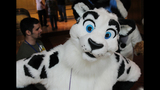 'Furries' return to Pittsburgh for 2013… - (5/25)