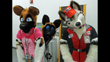'Furries' return to Pittsburgh for 2013… - (14/25)