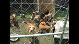 Photos: Humane officers rescue 22 dogs from… - (16/25)