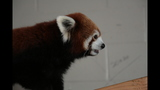 Red panda, giraffes at Pittsburgh Zoo - (11/14)