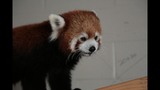 Red panda, giraffes at Pittsburgh Zoo - (6/14)