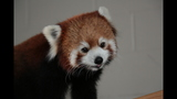 Red panda, giraffes at Pittsburgh Zoo - (3/14)