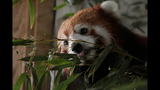Red panda, giraffes at Pittsburgh Zoo - (12/14)