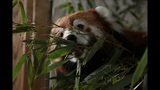 Red panda, giraffes at Pittsburgh Zoo - (13/14)
