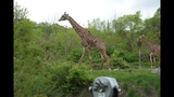 Red panda, giraffes at Pittsburgh Zoo - (9/14)