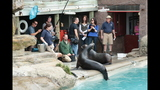 Sea lions, lemurs at Pittsburgh Zoo - (10/25)