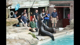Sea lions, lemurs at Pittsburgh Zoo - (21/25)
