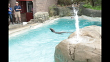 Sea lions, lemurs at Pittsburgh Zoo - (8/25)