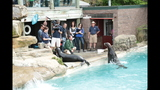 Sea lions, lemurs at Pittsburgh Zoo - (22/25)