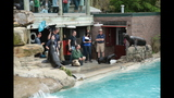 Sea lions, lemurs at Pittsburgh Zoo - (11/25)