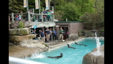 Sea lions, lemurs at Pittsburgh Zoo - (24/25)