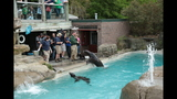 Sea lions, lemurs at Pittsburgh Zoo - (9/25)