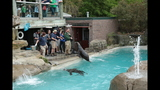 Sea lions, lemurs at Pittsburgh Zoo - (5/25)