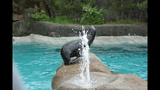 Sea lions, lemurs at Pittsburgh Zoo - (25/25)