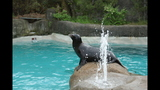 Sea lions, lemurs at Pittsburgh Zoo - (6/25)