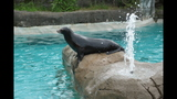Sea lions, lemurs at Pittsburgh Zoo - (18/25)