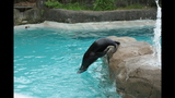 Sea lions, lemurs at Pittsburgh Zoo - (1/25)
