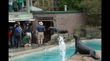 Sea lions, lemurs at Pittsburgh Zoo - (15/25)
