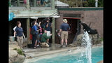 Sea lions, lemurs at Pittsburgh Zoo - (16/25)