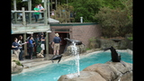 Sea lions, lemurs at Pittsburgh Zoo - (17/25)