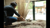 Meerkat, donkeys at Pittsburgh Zoo - (9/25)