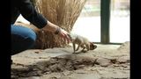 Meerkat, donkeys at Pittsburgh Zoo - (22/25)