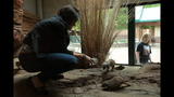 Meerkat, donkeys at Pittsburgh Zoo - (3/25)