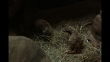 Meerkat, donkeys at Pittsburgh Zoo - (6/25)
