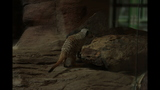 Meerkat, donkeys at Pittsburgh Zoo - (12/25)