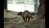 Meerkat, donkeys at Pittsburgh Zoo - (4/25)