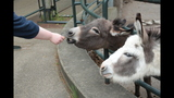 Meerkat, donkeys at Pittsburgh Zoo - (11/25)