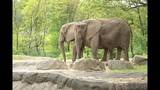 Elephants, sharks at Pittsburgh Zoo - (21/25)