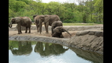 Elephants, sharks at Pittsburgh Zoo - (1/25)