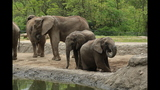 Elephants, sharks at Pittsburgh Zoo - (23/25)