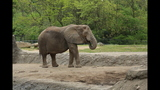 Elephants, sharks at Pittsburgh Zoo - (22/25)