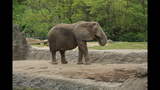 Elephants, sharks at Pittsburgh Zoo - (4/25)