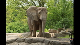 Elephants, sharks at Pittsburgh Zoo - (5/25)