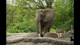 Elephants, sharks at Pittsburgh Zoo - (13/25)