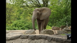 Elephants, sharks at Pittsburgh Zoo - (2/25)