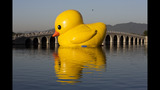 World traveling 40-foot rubber duck making… - (16/20)