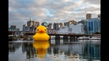 World traveling 40-foot rubber duck making… - (1/20)