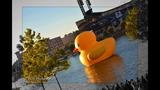 Quack Quack! WPXI viewers pose for pics with… - (16/25)